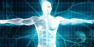 """Scoperto un nuovo organo: si chiama """"interstizio"""". Tra i più grandi del corpo umano"""